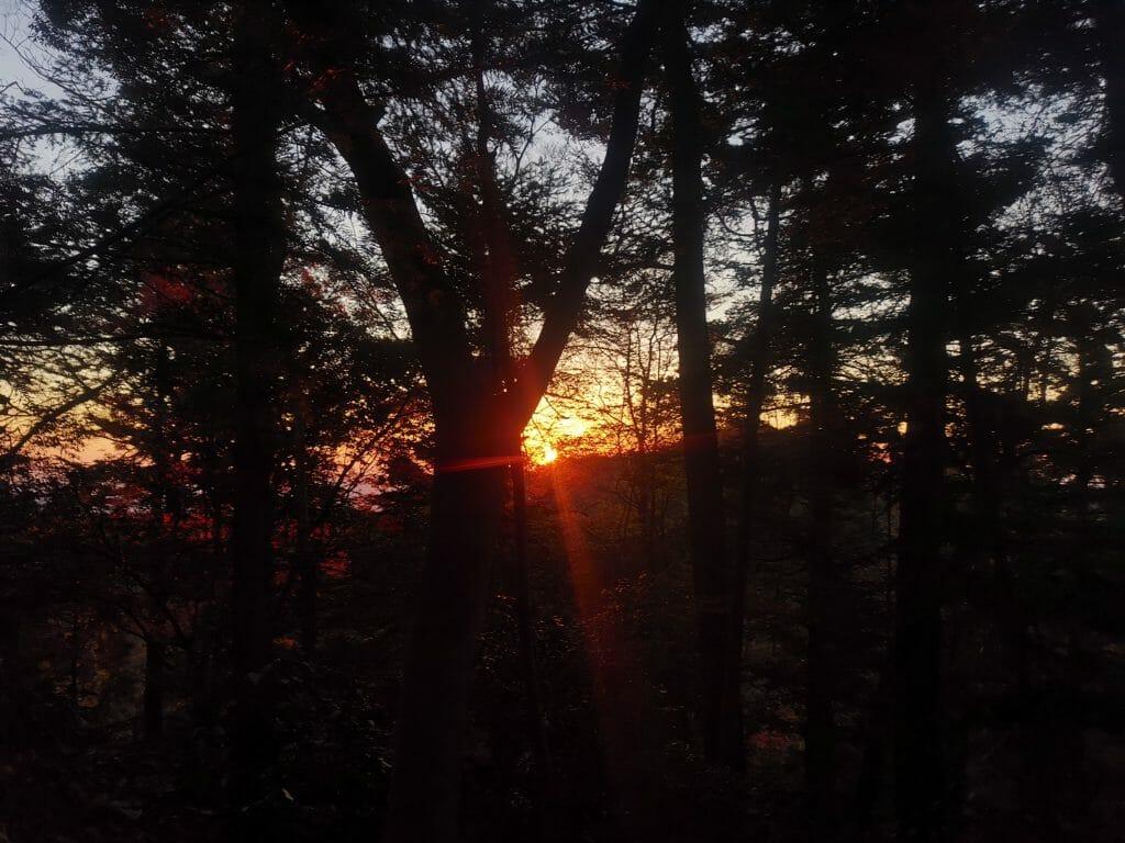 高尾山日の出早朝202012月年12月紅葉後