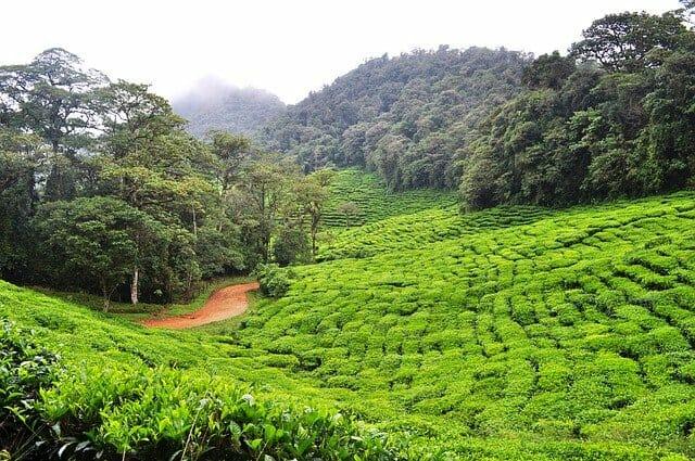 緑茶ポリフェノール松果体活性化研究所